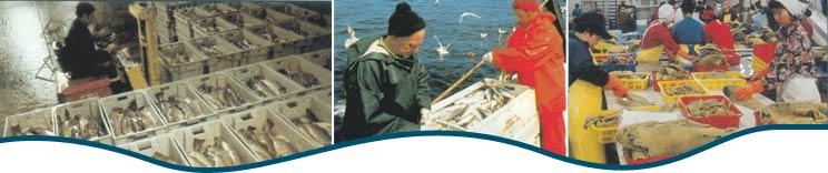 plasticfishcontainers.com